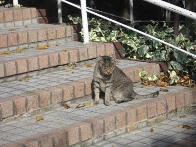 Cat_20200122002301