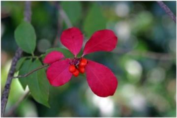 Flower_20200511152801