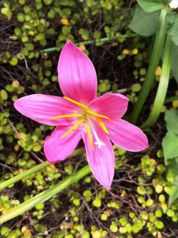 Flower_20200520022401